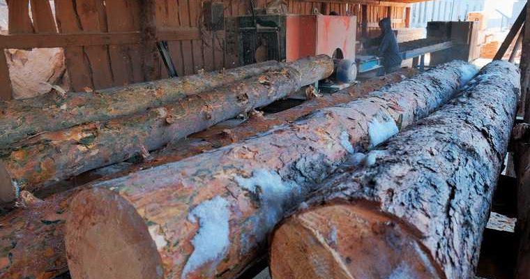 вывоз курганского леса в Казахстан