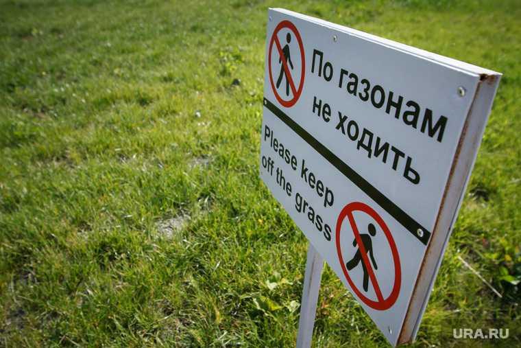 Мэрия Екатеринбурга подрядчик газон