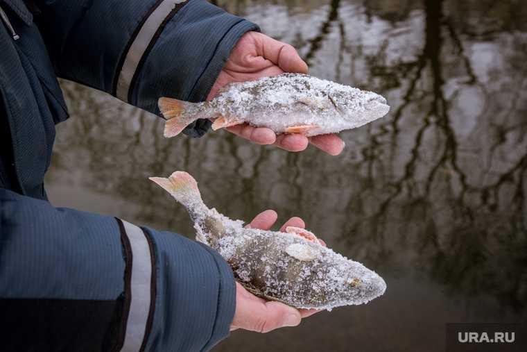 массовые сокращения рыболовов ЯНАО квоты на добычу белой рыбы