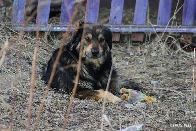 Бездомные собаки Курганская область
