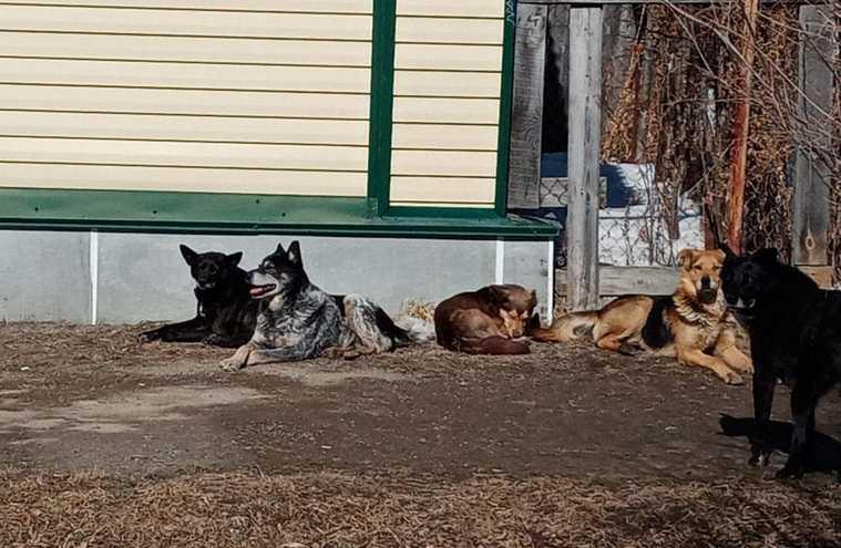 Бездомные собаки держат в страхе курганских школьников. Фото