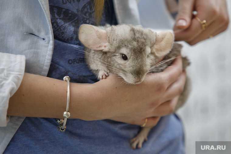 пожар в подпольном террариуме погибли сотни животных проверка прокуратуры