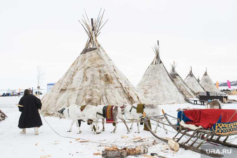 В ЯНАО из-за бешенства отменили главный праздник аборигенов