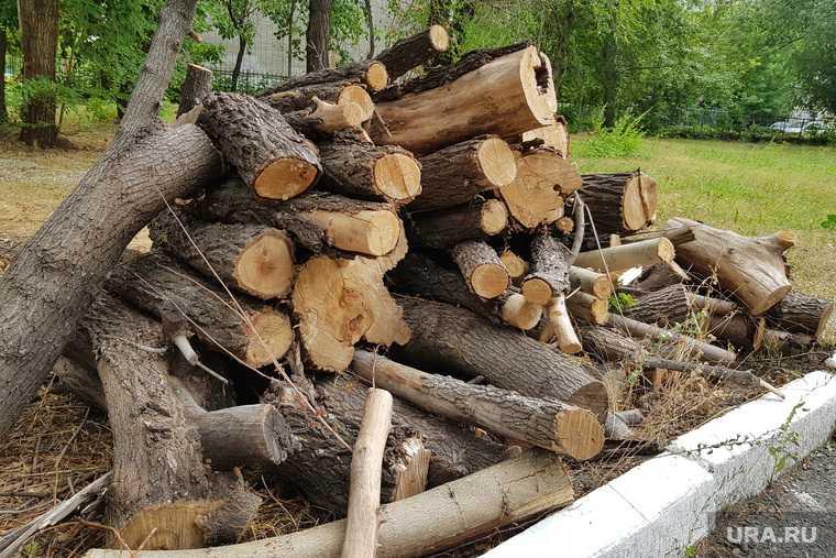 вырубка деревьев Курган