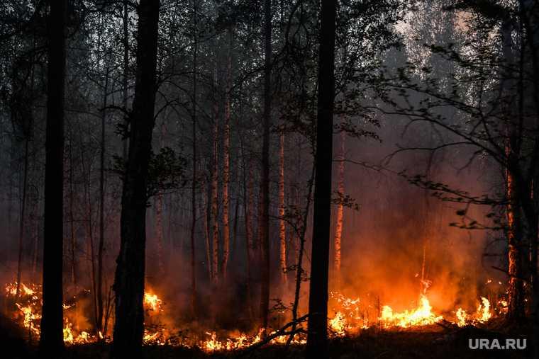 Глава Минприроды: два региона занижают данные о лесных пожарах