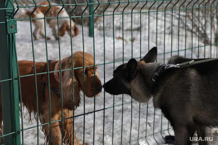 приют для собак «Счастье в дом» Хаски Екб Екатеринбург закрытие проверка Роспотребнадзора